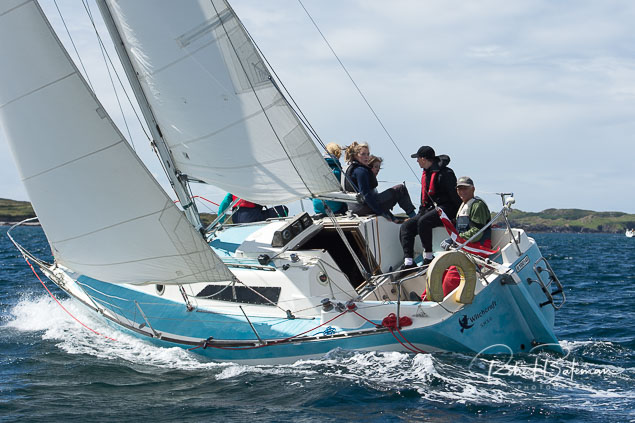 Fastnet race calves week2