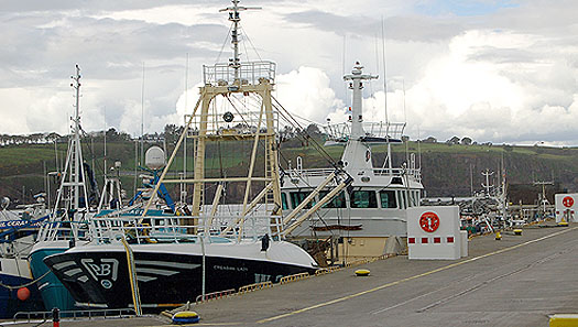FISHING FLEET AT DUNMORE EAST
