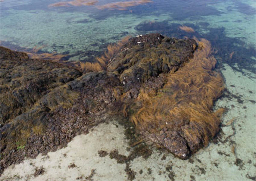 Ireland's seaweed resource