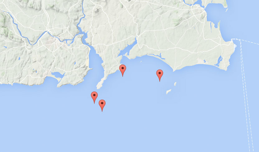 Whale sightings off the South East in January 2016