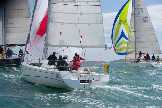 Calves Week Sailing
