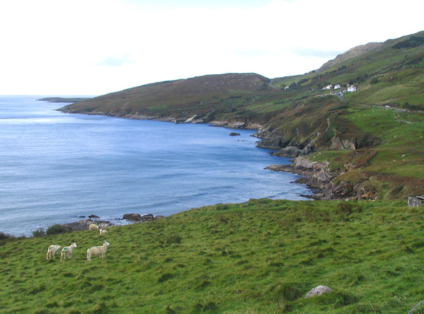 donegal_bay_sheep_1a.jpg