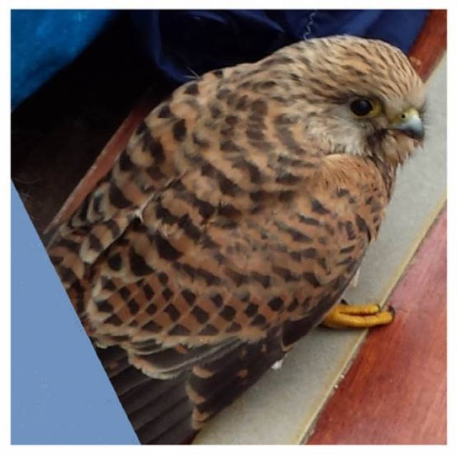 The Kestrel circumnavigated Dalkey Island in Aideen and flew away safely when back ashore in the National Yacht Club