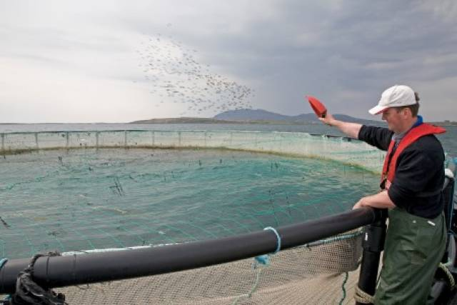 New Marine Research Cluster For Connemara To Focus On Aquaculture Research