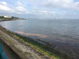 The 'orange slick' at Salthill near Dun Laoghaire this morning, Tuesday 25 June, now confirmed by DLRCoCo to be caused by an algal bloom