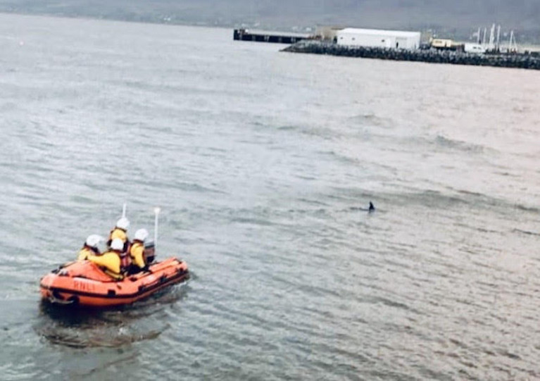 Fenit Lifeboat Guides Dolphin Out Of Danger In Shallow Waters