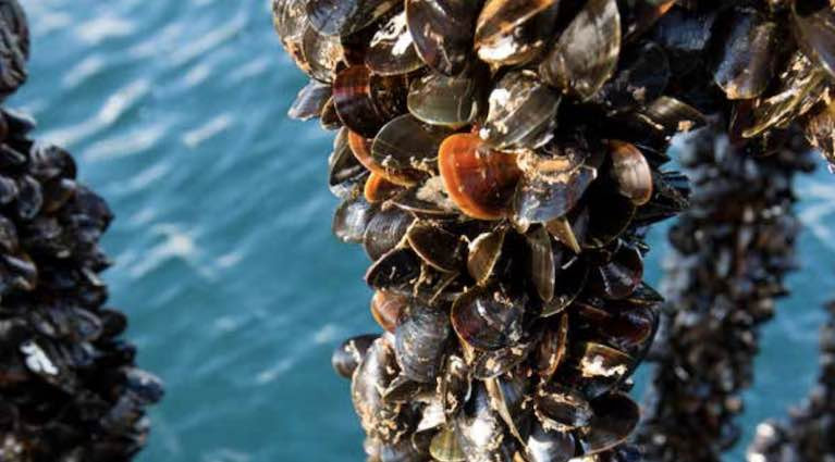 Rope mussel farmers suffered a 34% fall in sales between February and June