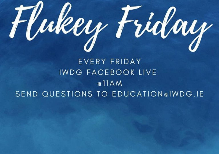 Join Irish Whale & Dolphin Group On Facebook Live For 'Flukey Friday'