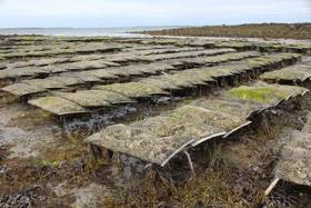 Oyster Farming Industry & Researchers Meet To Discuss Latest Knowledge On Oyster Health