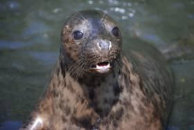 Poison Ivy at the Seal Rescue Ireland sanctuary in Courtown