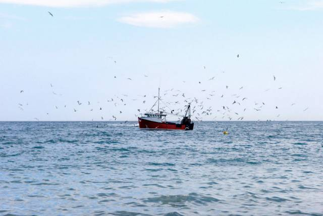 UK Fishing Fleets Urged To Prepare For Catch Certificates In Event Of No-Deal Brexit