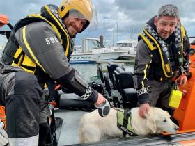 Howth Coast Guard volunteers have Max the dog in safe hands