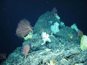 Sponges found on the Charlie-Gibbs Fracture Zone using the ROV Holland I during the recent TOSCA expedition