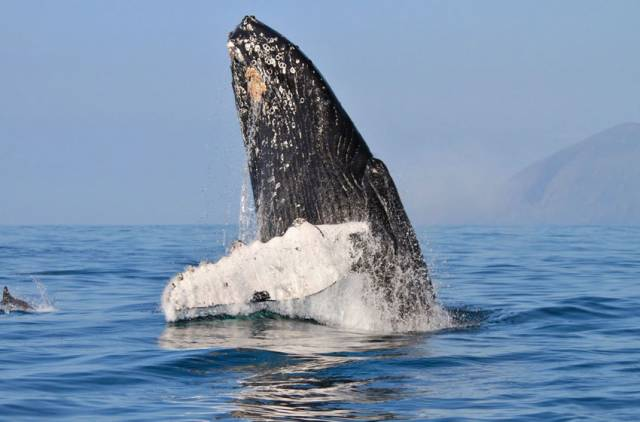 Humpback whales and dolphins were among the wildlife filmed by Eoin Warner and his team for the TG4 two-parter Éire Fhiáin
