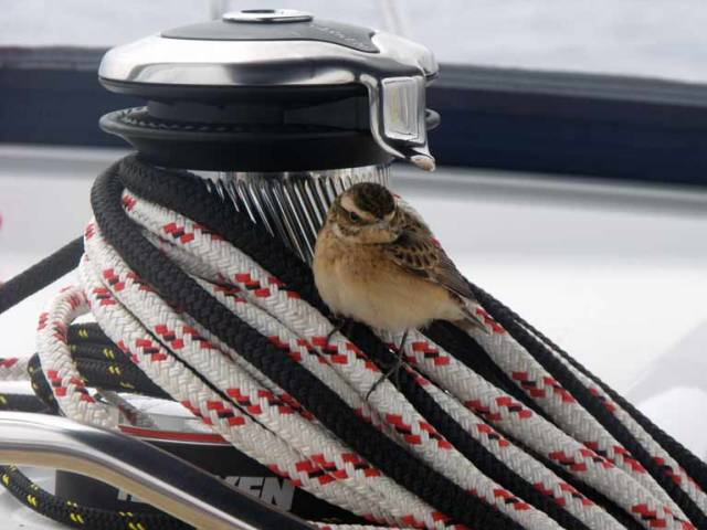 A bird settles on a Harken winch during a delivery voyage of a new Jeanneau from France to Turkey