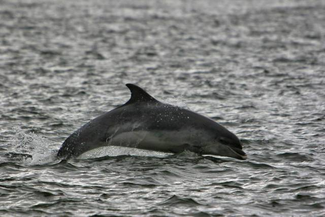 Kerry Gas Terminal Plan Faces Legal Challenge Over Dolphin Habitat & Changes In Climate Law