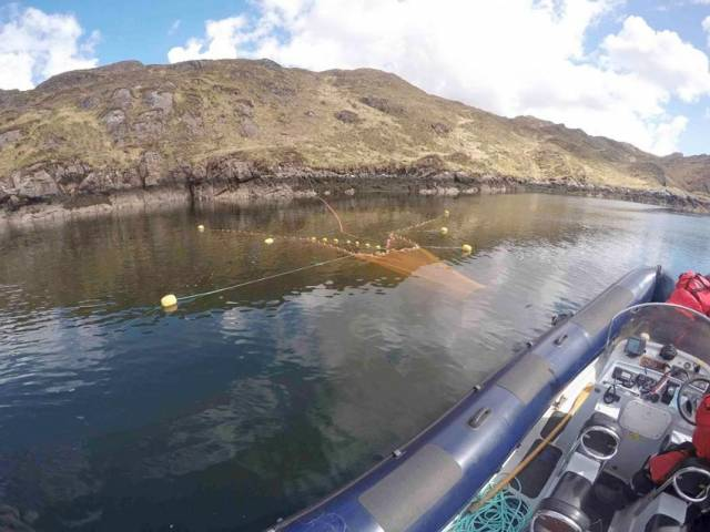Bag-Nets & Sentinel Cages Deployed At Killary Harbour