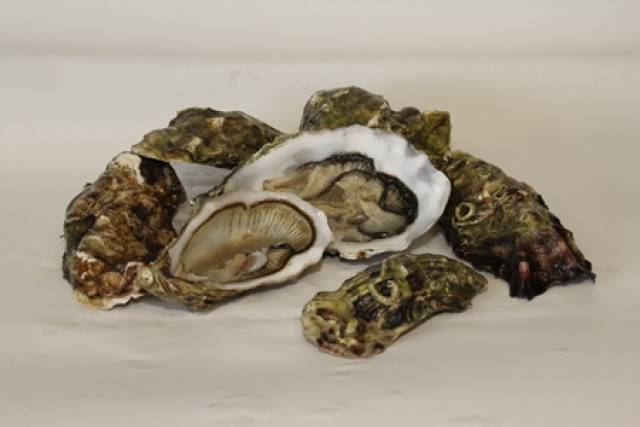 Pacific oysters are one of a number of species cultivated in the Irish aquaculture industry