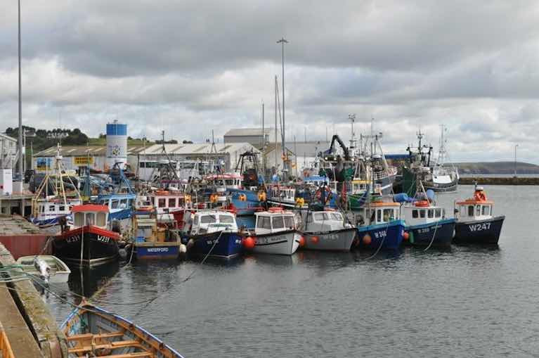 Environmental & Fishing Groups Make Joint Appeal to Reinstate Inshore Trawling Ban