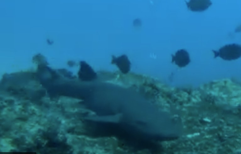 Endangered Shark in Southern Africa Has Extended Its Range, Scientists Find