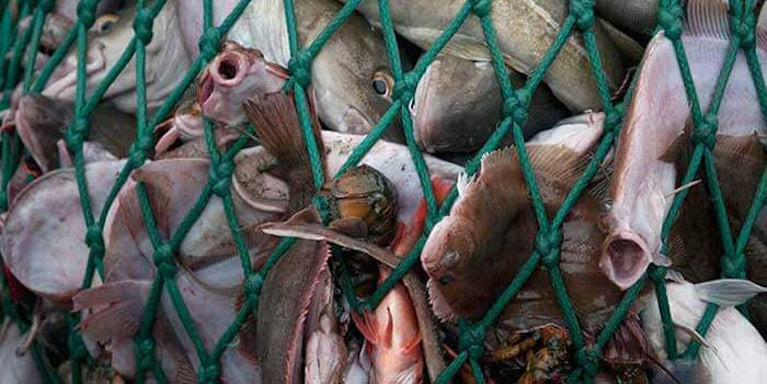 It has been claimed up to 1.7 (one point seven) million tonnes of unwanted and juvenile fish was being discarded annually