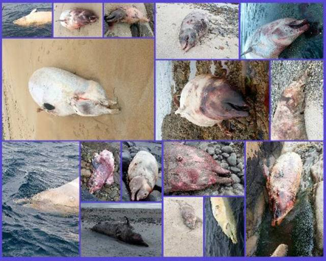Photos of some of the 16 strandings sent to the IWDG by members of the public