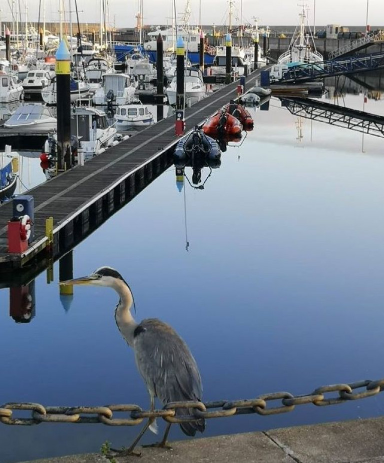 A heron at Bangor Marina in County Down