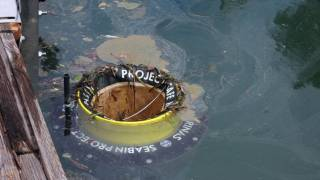 Howth will next week get a Seabin water cleaning device much like this one