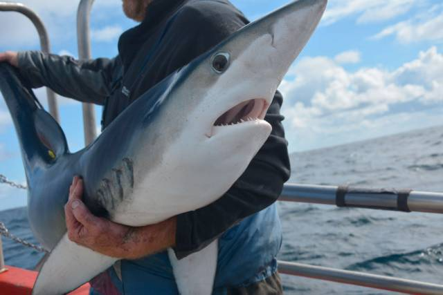 'Ballycotton Big Fish' Hopes To Lure Top Sea Anglers For Four-Day Shark Festival