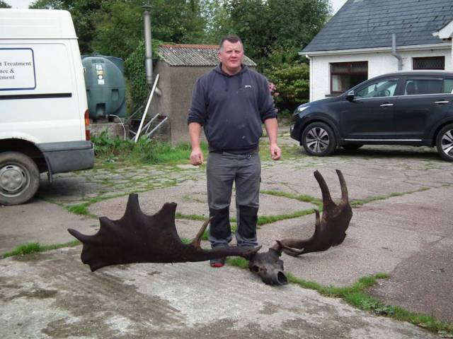 Giant Irish Elk Skull & Antlers Fished From Lough Neagh