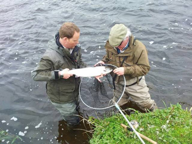 Wild Salmon & Sea Trout Tagging Scheme (Amendment) Regulations 2017 and Conservation Measures For 2018 Season