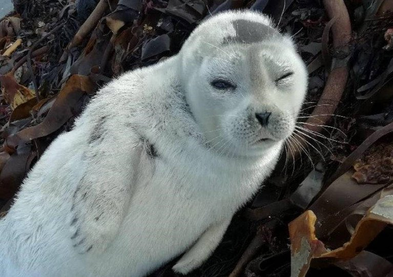 Cloudberry the Arctic ringed seal pup was found in Quilty, Co Kerry on Sunday