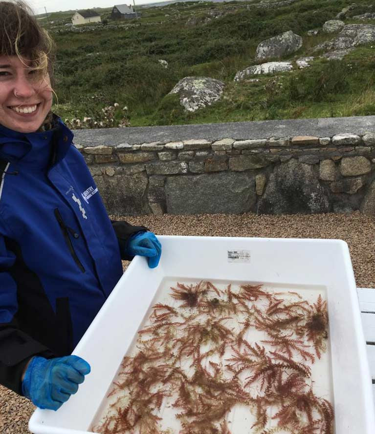 Marine science researcher Silvia Blanco with Red seaweed Asparagopsis armata tests at Bantry marine research station, Co Cork, which may help to reduce methane emissions in cattle if added to animal feed