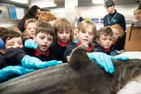 Rang 2 children from Scoil Shéamais Naofa in Bearna get up close with the skin of a tope shark