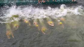 The men's starters make a splash in the 98th Liffey Swim on Saturday 9 September