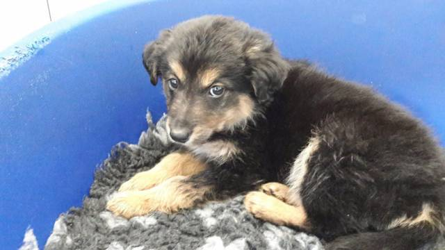 One of the puppies recovered on Saturday night at Dublin Port in the fourth such seizure this year