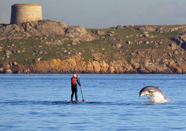 Bottlenose dolphin playing with a paddleboarder in front of Dalkey Island