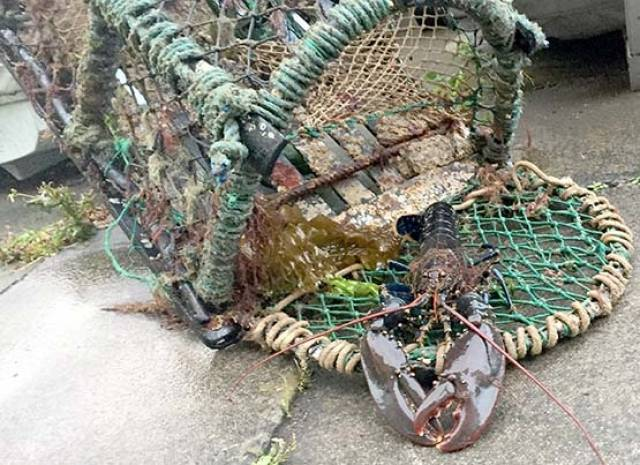 Lobster Pot Fishermen Reminded of Obligation to Other 'Users of the Sea'