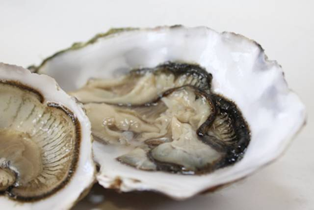GMIT-Led Research Team Launches World's First Shellfish Traceability Tool
