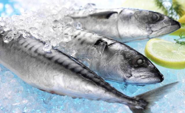 Significant Increase in Irish Mackerel Quota: 41% increase in Most Important Fishery for 2020