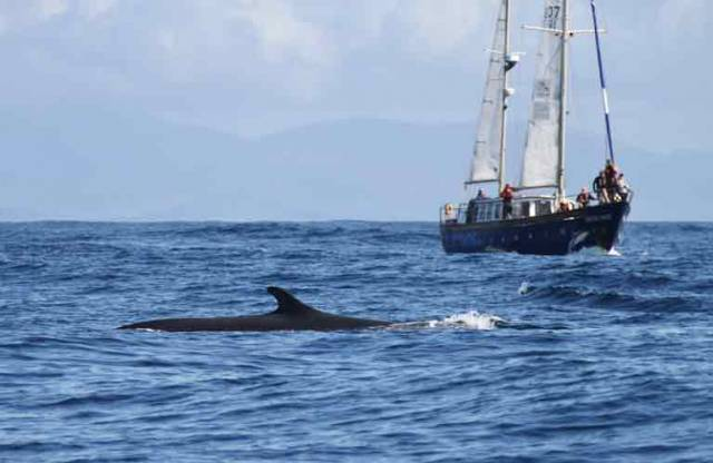 IWDG's Celtic Mist with Fin Whale