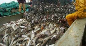 €260m in Fish Quotas Secured for 2019