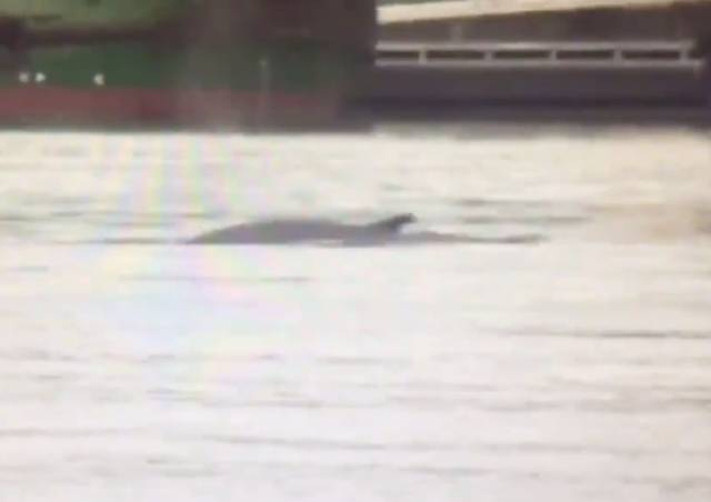 'Whale' Spotted In River Liffey At Dublin Port