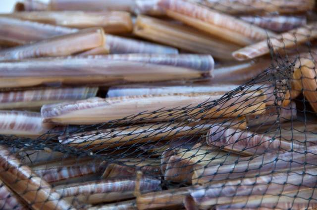 Public Consultations Conservation Proposals For Razor Clams In North Irish Sea & Brown Crab