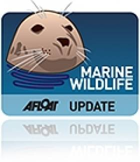 Marine Wildlife News: Seals Returned To Wild, Dolphin Says Adieu, Irish Sea Life Revealed
