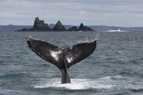 Have A Whale Of A Time This National Biodiversity Week