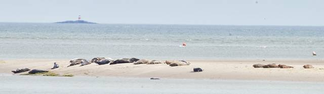 Bull Island is an especially sensitive area, unique also as host to both species of Irish seals, hauling out, feeding and breeding within the boundaries of the Capital city