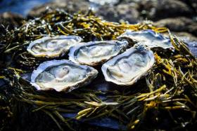 Marine Institute Recruiting Temporary Laboratory Analyst For Foodborne Viruses In Shellfish