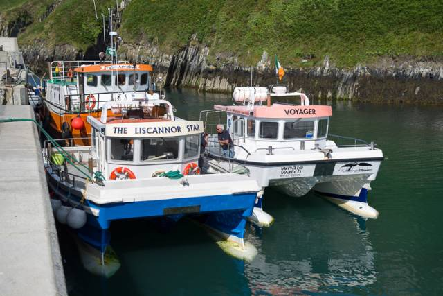 Marine Wildlife watching boats at Cape Clear Harbour