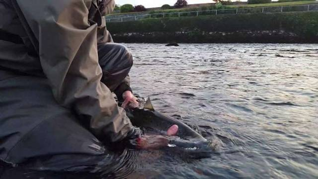 Catch and Release weekend to take place on Saturday 6th & Sunday 7th of July 2019
